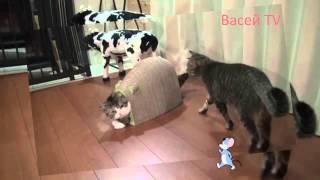 две кошки  борьба за домик