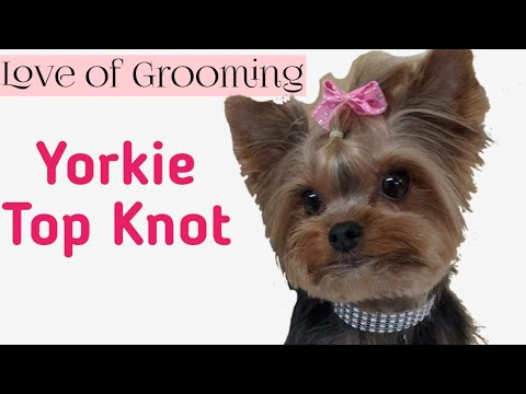 How To Tie Up A Yorkies Topknot Youtube