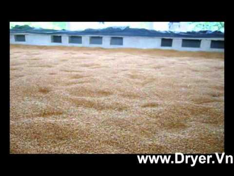 Máy sấy nông sản12 tấn | may say nong san12 tan