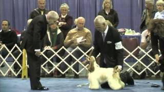 Best In Futurity - 2013 Asc Flushing Spaniel Show