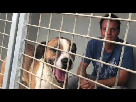 Vidéo : Vendredi Rémi Gaillard s'enferme dans une cage de la SPA de Montpellier
