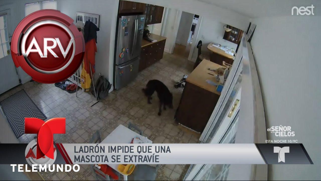 rob-una-casa-pero-impidi-que-el-perro-escapara-al-rojo-vivo-telemundo