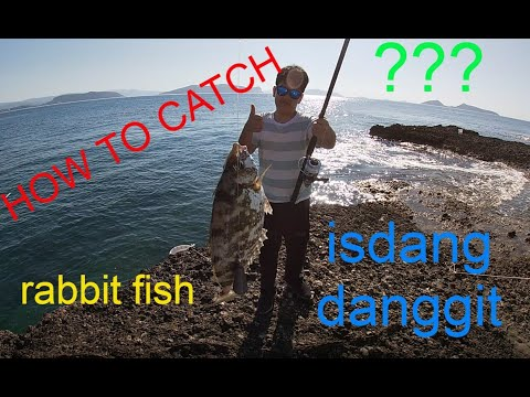 Fishing And Bonding With My Buddy: How To Catch Rabbitfish
