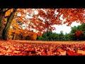золотая осень в небе кружит листья