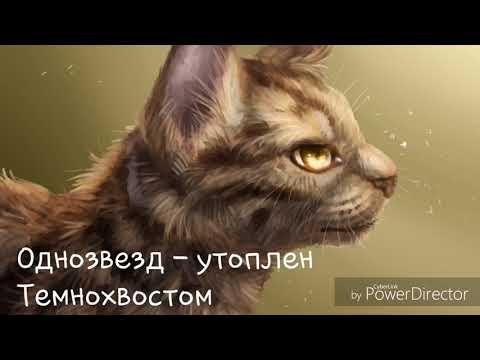 Смерти котов - воителей.