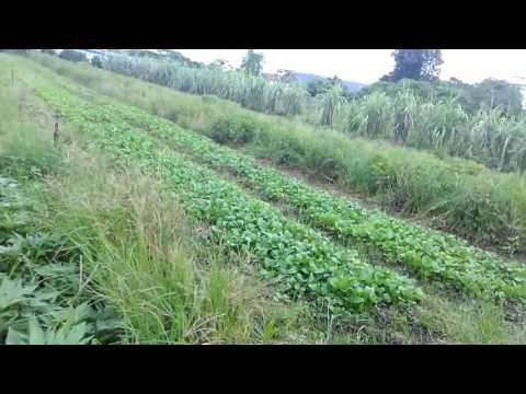 Malaysia vegetable farm visit(1)