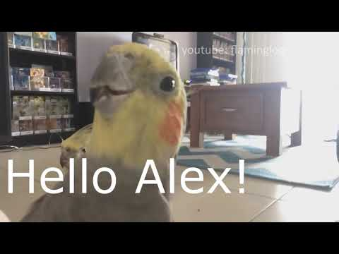 Wii Honk Channel (Full Version)
