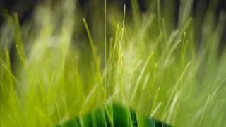 שולי רנד - שירת העשבים