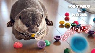 カワウソが超夢中になる謎のおもちゃを大量にあげた結果 Otter Thrilled by Lots of Jumping Poppers