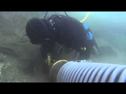 lbd  1st big dredge dive