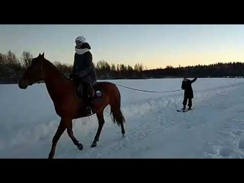 Скиджоринг на лошадях!