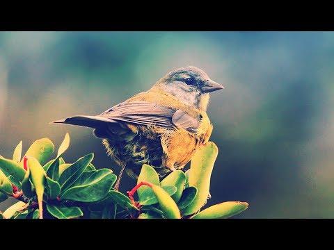 Northern Quarter - Songbird [Emergent Shores]