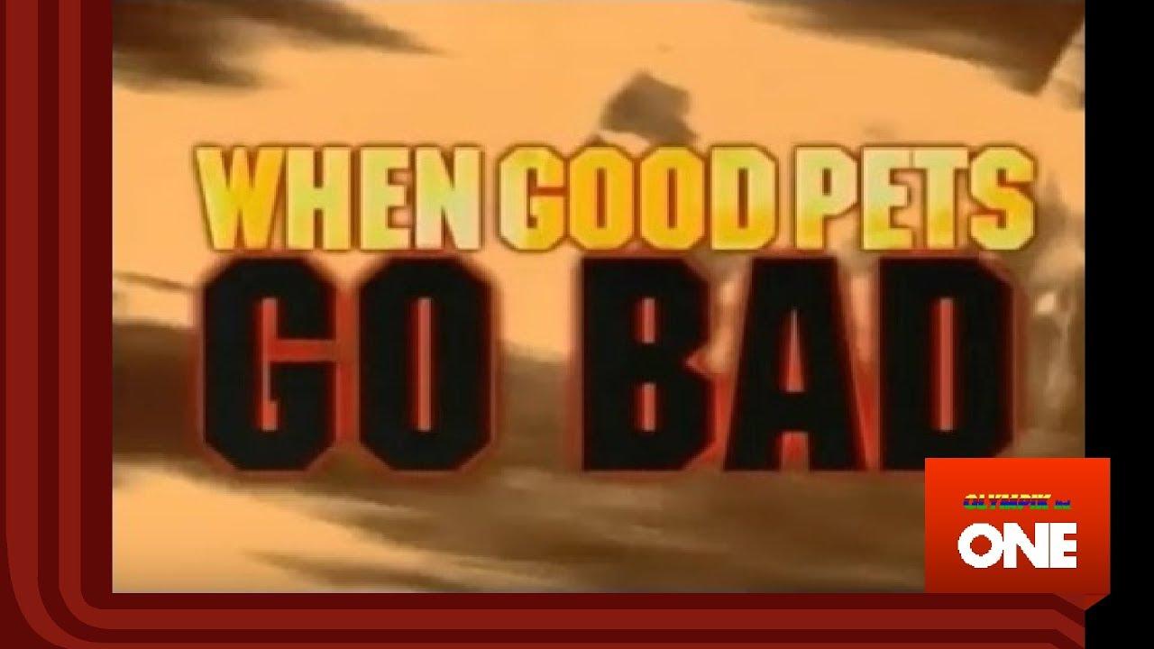 When Good Pets Go Bad Olympik One Youtube