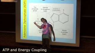 ATP and Energy Coupling