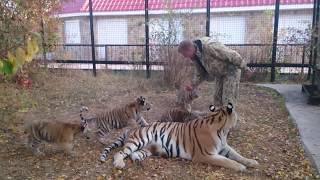 Тигрята атаковали Олега Зубкова!
