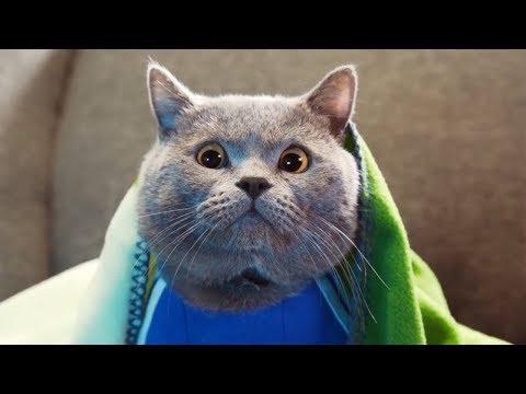Приключение кота Майкла 2018