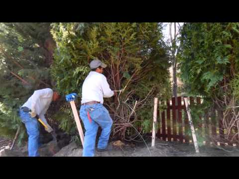 Installing Landscape Screening | Landscape Buffer | Privacy Screening