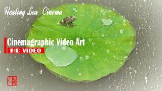느림의 미학, 둥근연잎 위에 앉은 개구리, 편안한 클래…