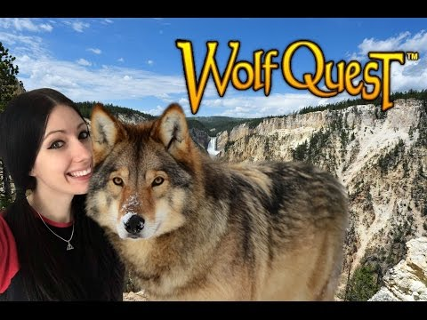 IM A BIG BAD WOLF! | WOLF QUEST! Ep.1 | Amy Lee33