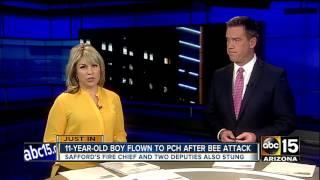 Boy, fire chief stung by bees in Safford, Ariz.