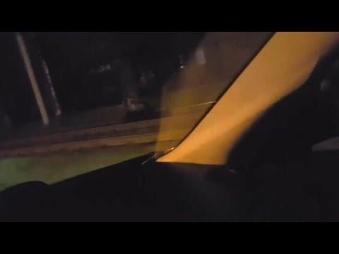 В Ярославле по улицам разгуливал медведь (видео)