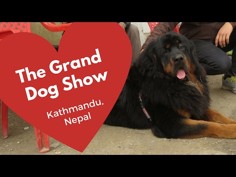 The Grand Dog show 7 (a dog lovers perspective) Dog training in Kathmandu Nepal