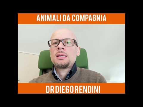 Coronavirus E Animali Da Compagnia, Cani E Gatti Possono Infettarci?