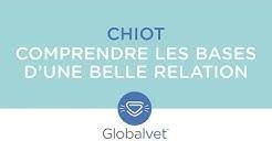 Globalvet | Webinaire : Comprendre les bases d'une belle relation