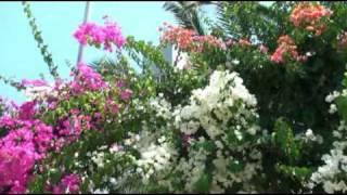 Demis Roussos - Lovely Sunny Day