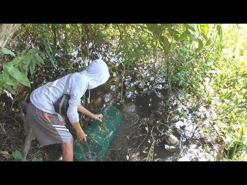Pasang Bubu Ikan 4 Buah Di Rawa Bekas Sungai