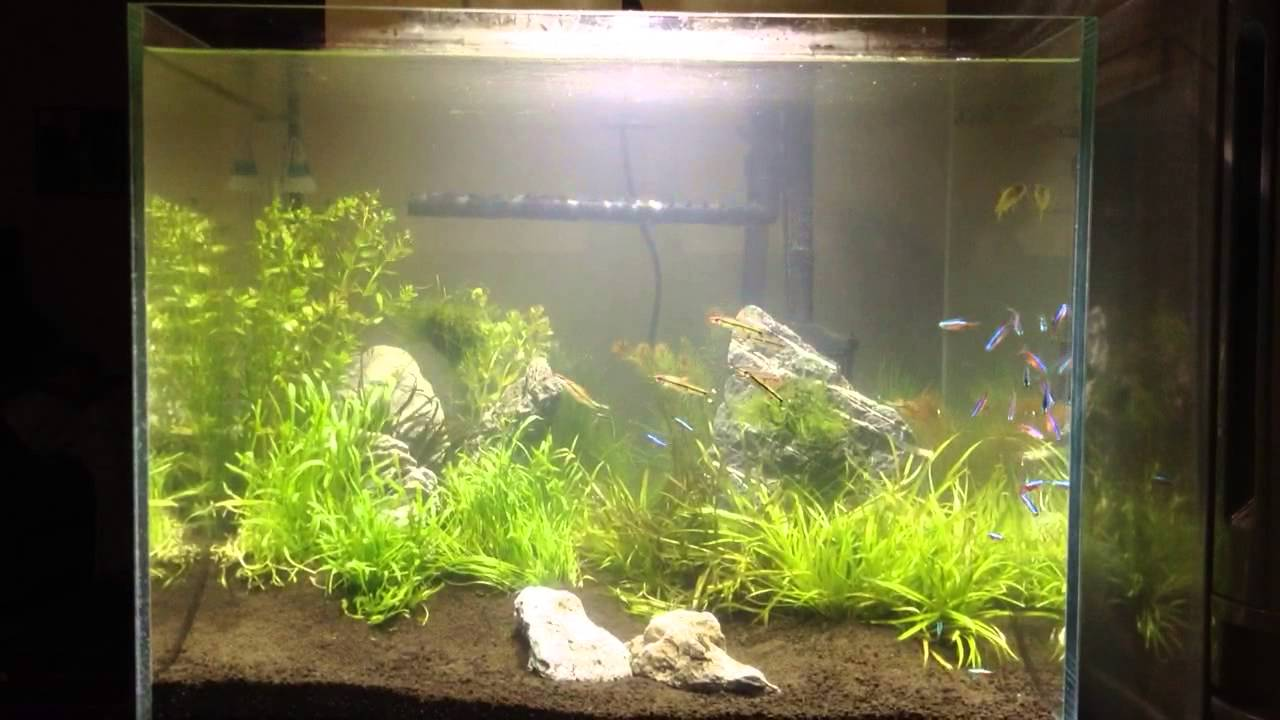 Aquascape with Kessil light and ADA Soil 2 - YouTube