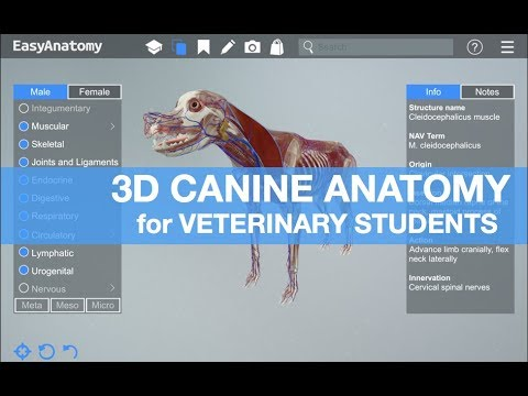 3d Canine Anatomy For Veterinary Students Easyanatomy Youtube