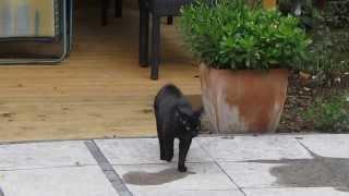 Hoe houd ik katten uit mijn tuin parksidetraceapartments