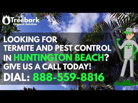Huntington Beach Termite Control And Pest Control Company