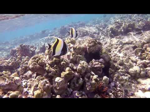 Kahaluu Beach Park - Snorkeling Paradise, Kailua Kona, Big Island of Hawaii 2017