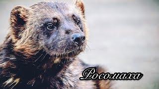 дикие животные для детей, как говорят животные