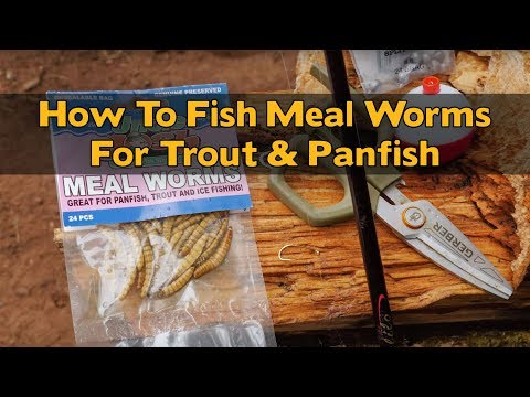How To Rig & Fish MEALWORMS For Trout & Panfish