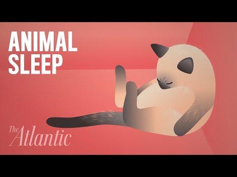 How the Animal Kingdom Sleeps