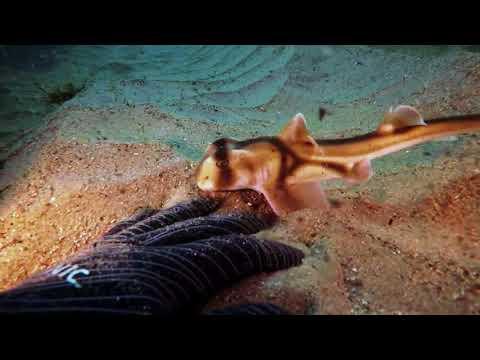 Вопрос: Какие максимальные размеры имеет белая акула?