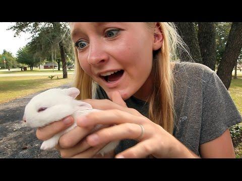 Ya Wanna Buy A Bunny?