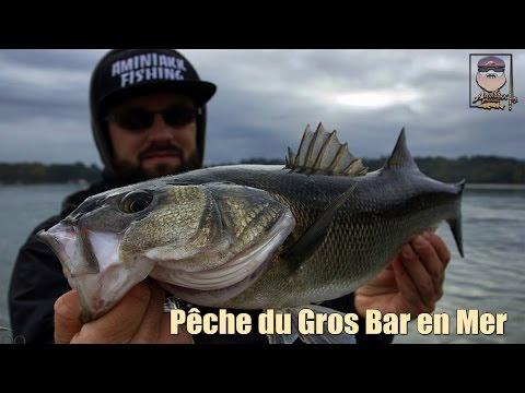Pêche du Gros Bar (mon record) en Mer - Bretagne sud - part 1