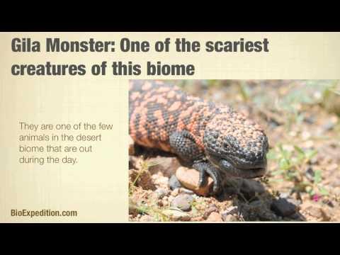 Desert Biome Facts
