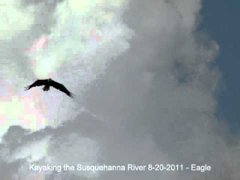 Kayaking the Susquehanna River Delta, PA 8/20/2011 - Eagles flying overhead