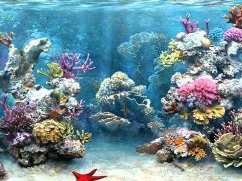 Coral Reef Biome - YouTube
