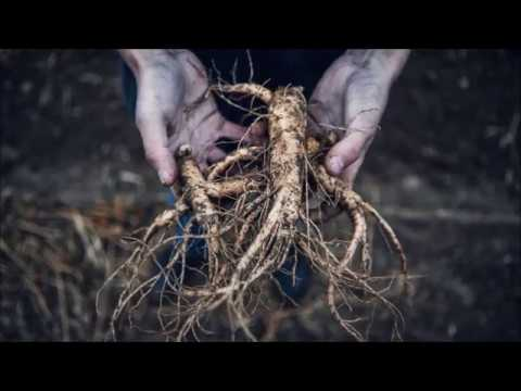 Download Back To HIs Roots   Real Appalachian Outlaw Mark Stewart Episode 1