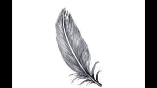 How To draw Realistic feather Tattoo Step By Step   Easy Drawing