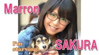 お腹すいた(^-^)  佐藤さくら My Sweet Dog Marron is starving ;) 佐藤さくら 検索動画 20