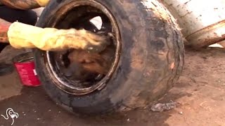 Puppy Stuck In Tire Finds Just The Right People