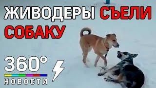 В Челябинской области появился живодер. Жертвой убийства стал бездомный пес