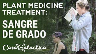 Sangre de Grado - Plant Medicine Treatment - Ayahuasca Retreats & Noya Rao Dietas |Casa Galactica